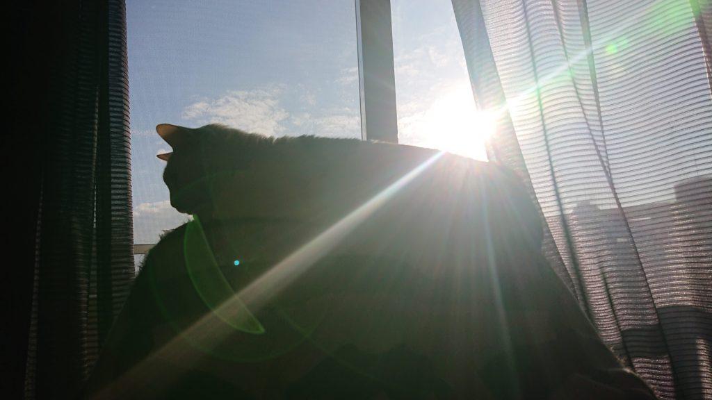 神格が高すぎてついに後光が射し始めた猫神様