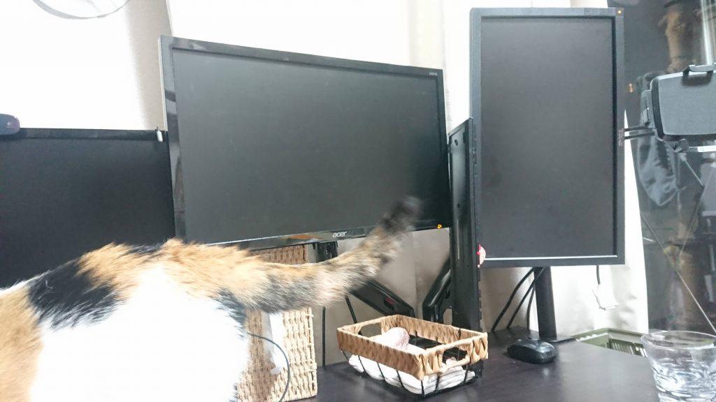 ディスプレイアームと猫箱と猫