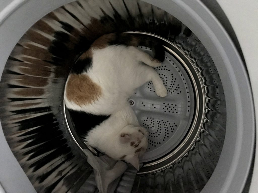 猫との暮らしあるある